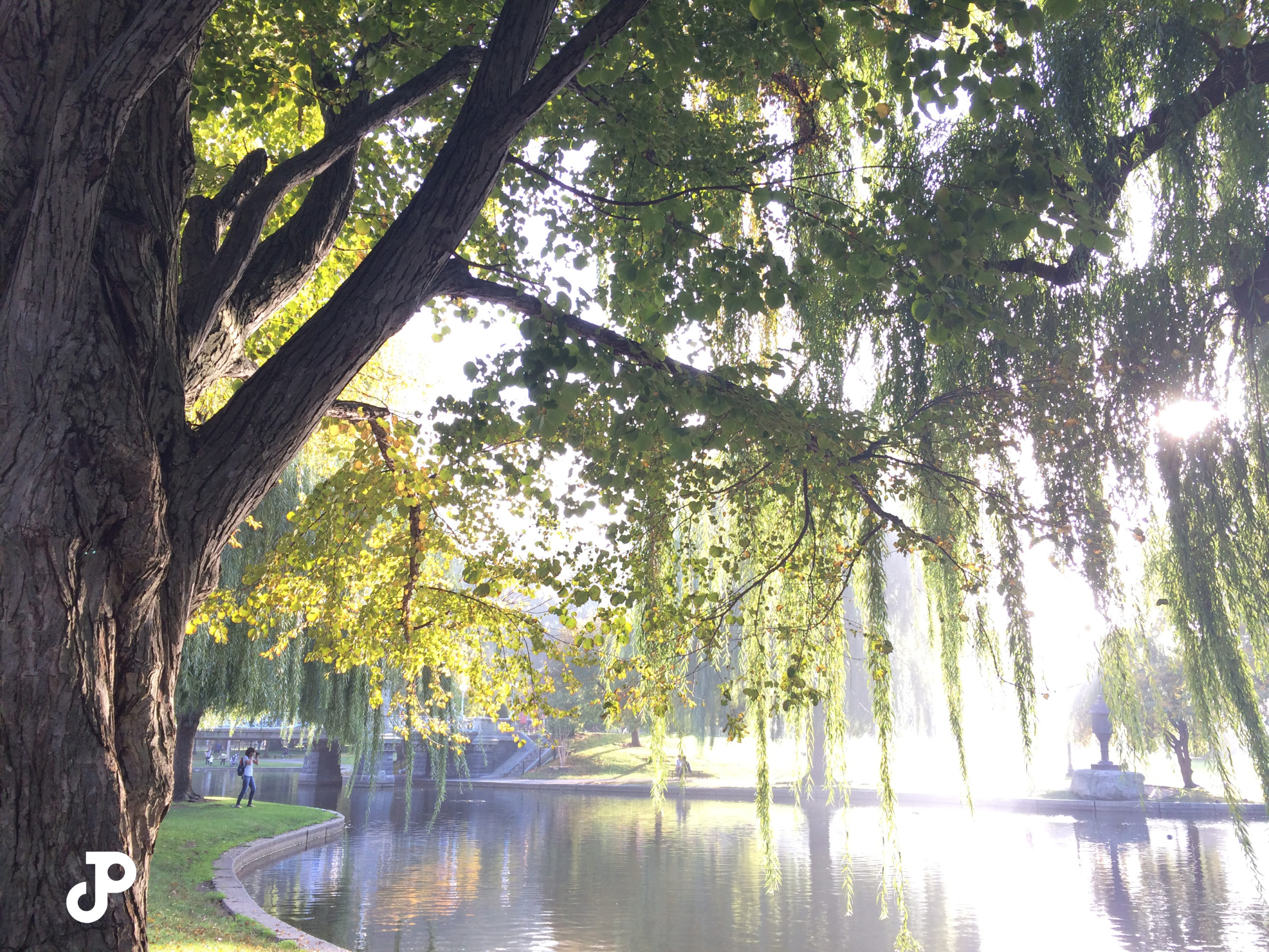 sun filtering through willow trees in the Boston Public Garden