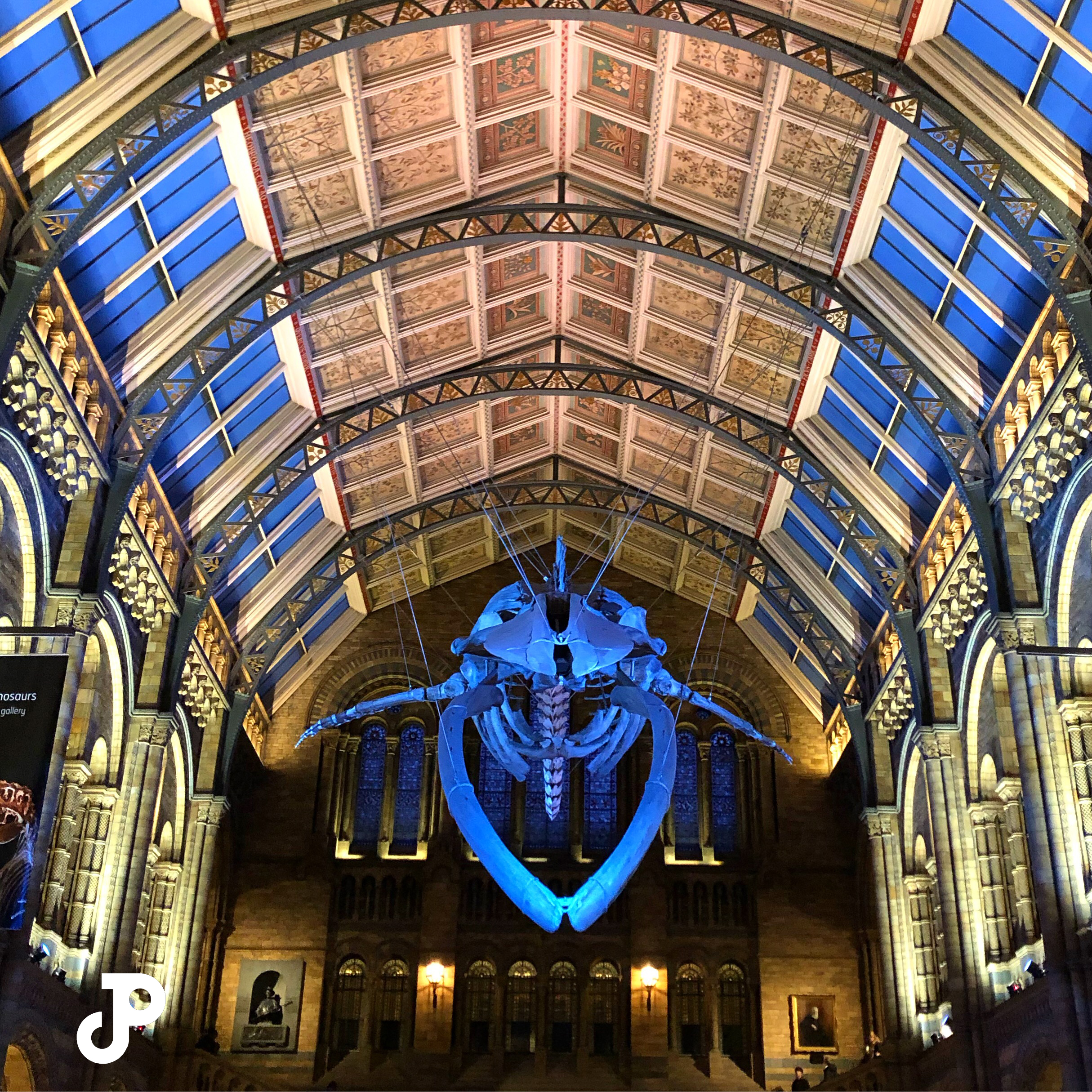 a whale skeleton suspended from the ceiling of the London Natural History Museum