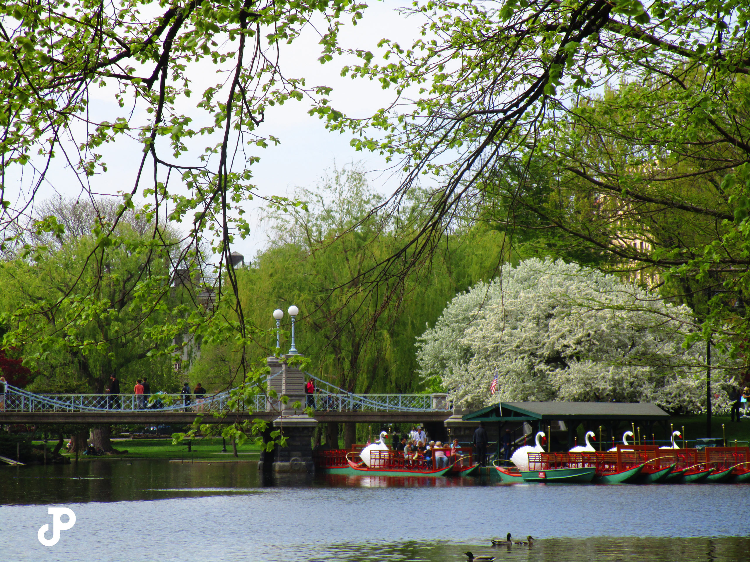 swan boats floating on a pond beside a bridge in the Boston Public Garden