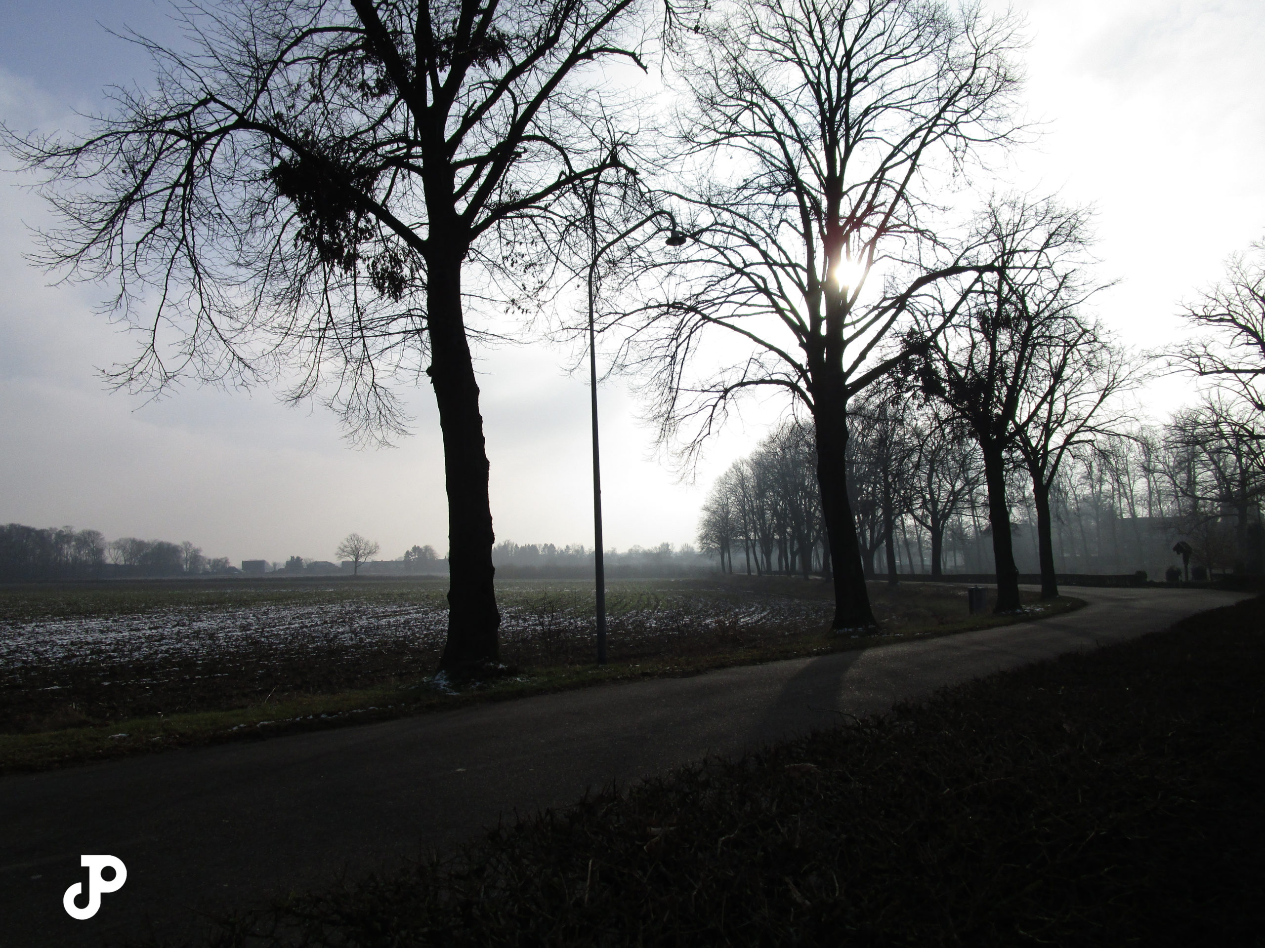 a shadowed road winding past silhouettes of trees and a foggy field in the distance